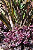 HEUCHERA AND PHORMIUM IN MIXED SPRING BED