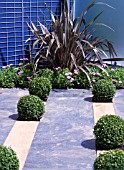MODERN URBAN GARDEN WITH STONE AND TIMBER FLOOR WITH PHORMIUM AND CLIPPED BUXUS