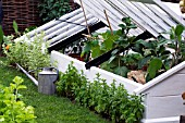 LARGE WOODEN COLD FRAME IN KITCHEN GARDEN