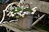 OLD FASHIONED WATERING CAN USED AS PLANTER