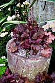HEUCHERA PEACH FLAMBE IN A CONTAINER