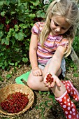 YOUNG GIRL PICKING RED CURRANTS (RIBES RUBRUM)