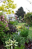 SMALL GARDEN WITH MIXED HERBACEOUS BORDER IN SUMMER