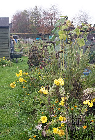VIEW_OF_ALLOTMENT_IN_WINTER