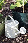 WATERING CAN AND RUNNER BEANS