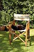 CAT SITTING ON CHAIR IN DAPPLED SHADE.