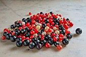 RIBES, BLACK, RED AND WHITE CURRANTS