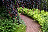 PATH OF BRICKS AT APPLETERN NL  SURROUNDED BY GROUND COVER PLANTS FERNS AND BAMBOO WITH WEEPING COPPER BEECH OVERHANGING