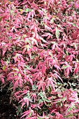 ACER MARLO JAPANESE JEWELS