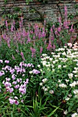 MIXED HERBACEOUS BORDER,  PHLOX PANICULATA FRANZ SCHUBERT,   MONARDA FISHES,   LYTHRUM SALICARIA RED SHADES