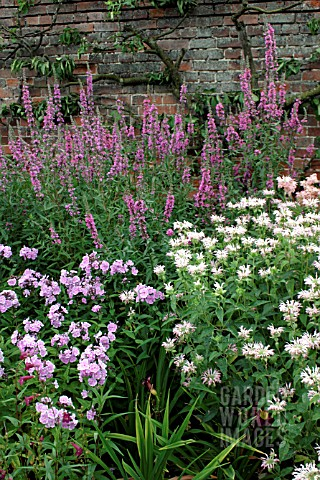 _MIXED_HERBACEOUS_BORDER__PHLOX_PANICULATA_FRANZ_SCHUBERT___MONARDA_FISHES___LYTHRUM_SALICARIA_RED_S