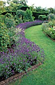 LAVANDULA USED AS EDGING
