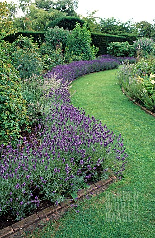 LAVANDULA_USED_AS_EDGING