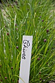 CHIVES LABEL