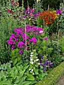 CAMPANULA, PHLOX, HELENIUM, AND ALCEA IN MIXED BORDER