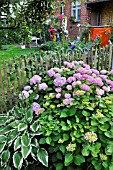 HYDRANGEA, HOSTA, IN A BACKYARD GARDEN. DESIGN: JUTTA WAHREN
