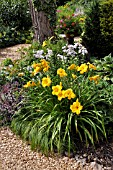 HEMEROCALLIS  IN A PERENNIAL GARDEN. DESIGN: MARIANNE AND DETLEF LUEDKE