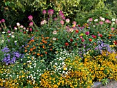 CLEOME, ZINNIA, AGERATUM, AND TAGETES IN MIXED BORDER
