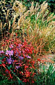 MIXED PLANTING BORDER WITH GRASSES AT BADGERS,  SUSSEX,  TOM AND ANN MOUNT