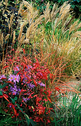 MIXED_PLANTING_BORDER_WITH_GRASSES_AT_BADGERS__SUSSEX__TOM_AND_ANN_MOUNT