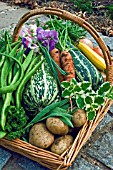 BASKET OF ORGANIC VEGETABLES AND HERBS