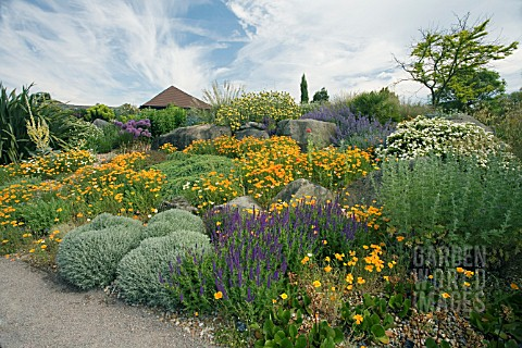 THE_DRY_GARDEN_AT_RHS_GARDEN_HYDE_HALL_IN_JUNE