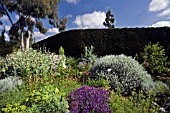 THE DROUGHT RESISTANT GRAVEL GARDEN AT BETH CHATTO GARDENS WITH PURPLE LAVANDULA IN THE FOREGROUND