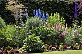 A COTTAGE GARDEN STYLE BORDER WITH  LUPINS,  DELPHINIUM,  PENSTEMON,  ASTER NOVAE ANGLIAE AND CAMPANULA.