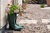WELLINGTON BOOTS USED AS PLANT CONTAINERS FOR PELARGONIUMS