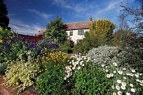 RHS_GARDEN_HYDE_HALL_IN_OCTOBER_WITH_SALVIA_INDIGO_SPIRES__BRACTEANTHA_COCO_AND_BIDENS_FERULIFOLIA_I