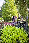 VISITORS ON THE BRIDGE AT RHS HYDE HALL GARDENS, IN THE FOREGROUND IS CORNUS ALBA AUREA AND BEHIND THAT IS PERSICARIA AMPLEXICAULIS