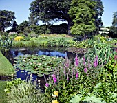 THE WATER GARDENS AT BETH CHATTO GARDENS