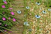 NIGELLA DAMASCENA (LOVE IN A MIST)