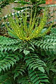 MAHONIA X MEDIA WINTER SUN (OCTOBER)