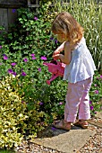 CHILD WATERING PLANTS WITH A WATERING CAN,  SURREY: LATE JUNE