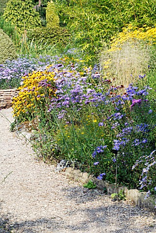 SCENE_IN_THE_PICTON_GARDEN__OLD_COURT_NURSERIES__NATIONAL_COLLECTION_OF_AUTUMN_FLOWERING_ASTERS__COL