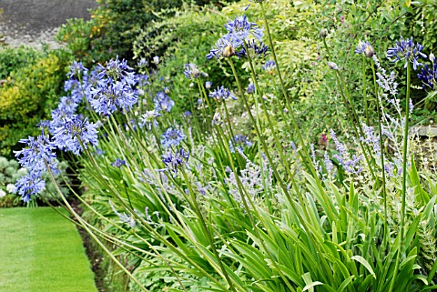 RETAINING_WALLS_ACCOMMODATING_CHANGE_IN_LEVELS_LOWER_BED_PLANTED_WITH_GERANIUM_CV_PEROVSKIA_BLUE_SPI
