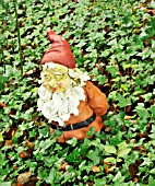 GNOME AT THE GNOME RESERVE