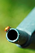 LADYBIRD ON GREEN WATERING CAN