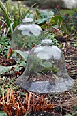GLASS CLOCHES IN WINTER