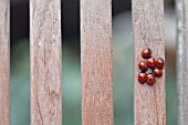 LADYBIRDS ON WOODEN CHAIR