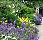 BLUE & YELLOW HERBACEOUS BORDER