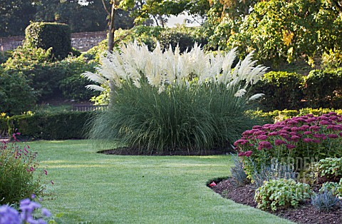 tre11161 cortaderia selloana 39 pumila 39 sedum specta asset details garden world images. Black Bedroom Furniture Sets. Home Design Ideas