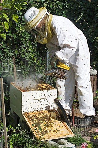 BEEKEEPER_ADDING_SMOKE_TO_PACIFY_BEES