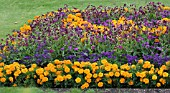 ORANGE AND PURPLE SUMMER BEDDING SCHEME