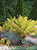 GRASSES,  FERNS & CONIFERS,  PLANT ASSOCIATION