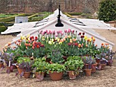 TULIPS & EARLY VEGETABLE DISPLAY BY COLD FRAME AT WEST DEAN GARDENS