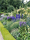 BLUE & CREAM HERBACEOUS BORDER,  WEST DEAN GARDENS