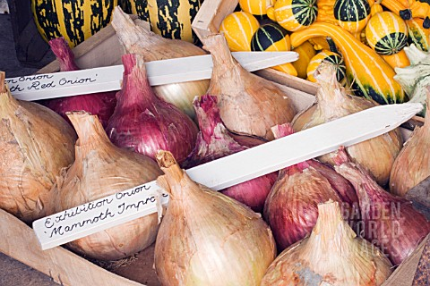 EXHIBITION_ONIONS_PREPARED_FOR_WINTER_STORAGE