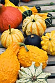 CUCURBITA PEPO, MIXED ORNAMENTAL GOURDS INCLUDING CROWN OF THORNS & ORANGE CROOK-NECK